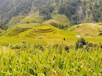 Trekking from Bac ha to Hoang Su phi